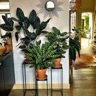45+ Plant Stand Design Ideas for Indoor Houseplants rexgarden