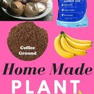 Make the Best homemade fertilizer from household items, Cheap and easy.