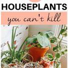 7 HOUSEPLANTS YOU CAN'T KILL