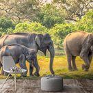 Elephants Animals Wild Animals Gray Wallpaper Mural