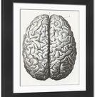 Large Framed Photo. Human Brain Engraving