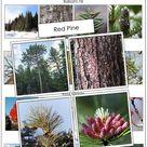 Tree Identification Cards - Set 1