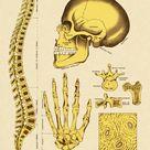 Jigsaw Puzzle. Various Human Bones