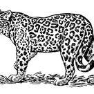 Kleurplaat jaguar. Gratis kleurplaten om te printen