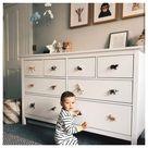Animal Knobs - Set of 6 - Safari Animal Bedroom Decor