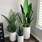Indoor plants that absorb humidity and clean the air naturally
