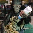 Monkeys Animals