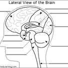 Label Brain Diagram Printout