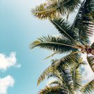 Tropical iPhone Wallpaper