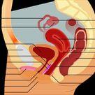 Diagram Female Anatomy