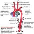 Instant Anatomy - Thorax - Vessels - Arteries - Ascending aorta
