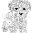Bichon frise puppy. Hand drawn dog. Sketch for anti-stress adult coloring book in zen-tangle style. Vector illustration for coloring page.