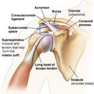 10 Best Exercises To Strengthen Your Rotator Cuff