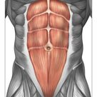 10 inch Photo. Close-up view of male abdominal muscles