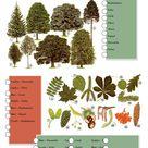 Unsere Bäume