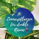 Zimmerpflanzen für dunkle Räume: 20 Schattenpflanzen | Pflanzen A-Z