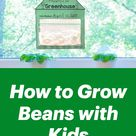 How to Grow Beans with Kids