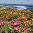 Namaqualand flower power
