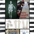 Printable LIFE SIZE Human Skeleton Model
