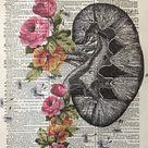 Anatomical Kidney, Kidney Flower Print, Medical Art, Size 8x10 Anatomical Wall Art, Kidney Stones, Human Kidney, Kidney Art Print, Book Art