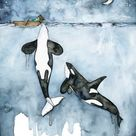 XLARGE Watercolor Orca Painting - Sizes 16x20 and up,