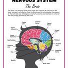 Nervous System Activity Set