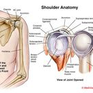 Shoulder pain Start at the thoracic spine. — Revo Physiotherapy & Sports Performance