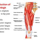 Quadriceps Femoris : Overview & Stretching » How To Relief