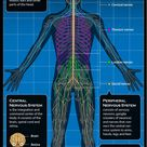 Nervous System: Facts, Function & Diseases