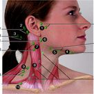 lymph glands location