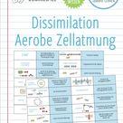 Dissimilation – Domino Spiel (Abitur)