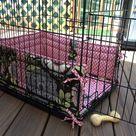 Cute Dog Beds