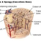 Difference Between Cranial and Spinal Nerves   Definition, Types, Function