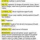 صور تشريح - Anatomy : Blood Suply Arteries and Veins of the Upper Limb