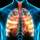 Human Respiratory System Lungs Anatomy Stock Footage Video