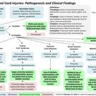 Acute Spinal Cord Injuries: Pathogenesis and clinical findings | Calgary Guide