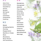 Herbs That Promote Hair Growth in 2020   Herbs for hair, Herbs for hair growth, Hair care growth