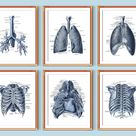 Respiratory System Anatomy Art Posters Lungs Art Print Bronchial Tree Pulmonologist Office Decor Nurse Gift Human Organs Diagram Digital