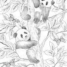 Pandas - Favoreads Coloring Club