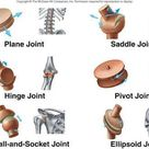 have multiple types of joints. And shoulder is the prime example for ball-socket type. Wrist joint is a saddle joint.