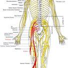Back Pain - Symptoms - Cause - Surgery