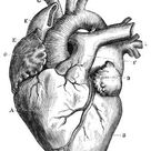 Diagram of a Human Heart for Kids | LoveToKnow