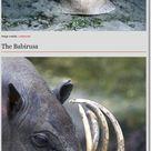 22 Strange Animals - WTF Pictures