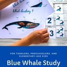 Blue Whale Study for Toddlers, Preschoolers, and Elementary Age Kids