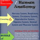 Human Body Systems Interactive Activities' MEGA BUNDLE of Google SlidesTM