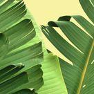 Banana Leaf Poster Set, Palm Leaf Prints, Set of 3, Botanical Print Set, Tropical Leaf Print Set, Palm Tree, Triptych, Yellow