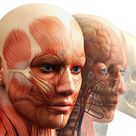 Fibromyalgie / Neue Erkenntnisse der Schmerzforschung