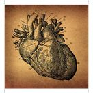 A1 Poster. Human Heart Engraving