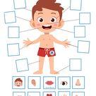 My Body. Five senses activities game