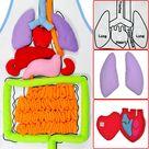 EduGame   Body Anatomy